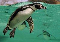 Надувные пингвины возмутили посетителей зоопарка в Китае