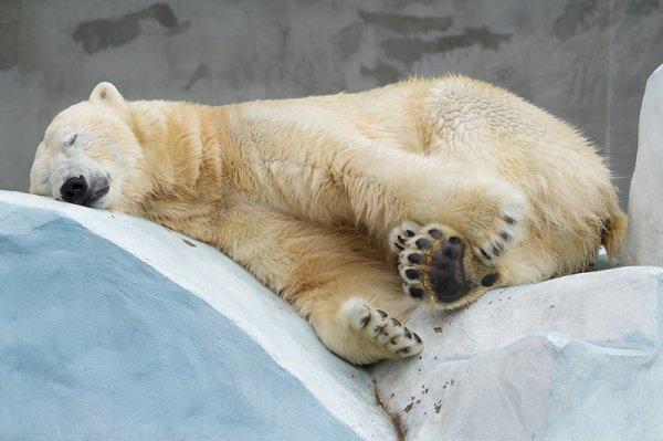 Медведи исурки вМосковском зоопарке впали вспячку