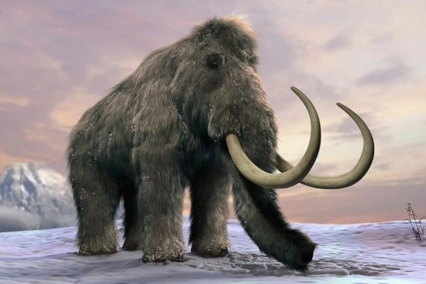 Оружие передали ученым недропользователи, добывающие бивни мамонта