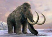 В Якутии нашли копье внутри скелета мамонта