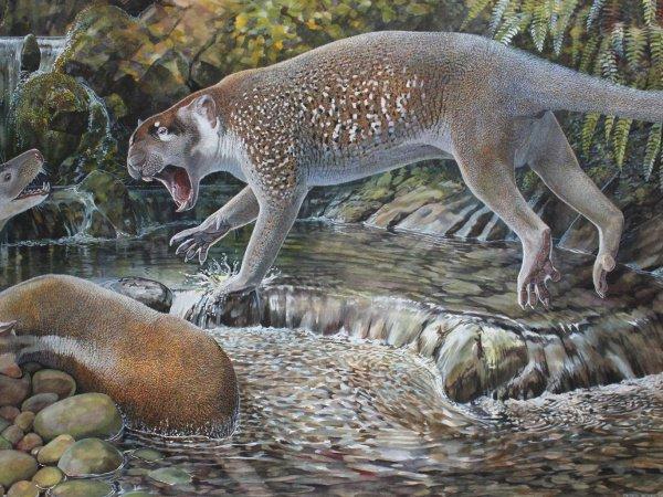Это лев размером с собаку, обладавший острыми клыками и похожий на кенгуру