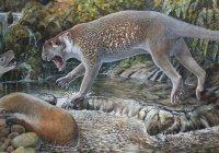 Ученые обнаружили останки льва-кенгуру