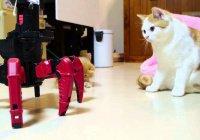 Робот для кота создан в Китае