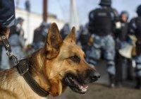В Карачаево-Черкесии нашли бомбу в машине боевиков