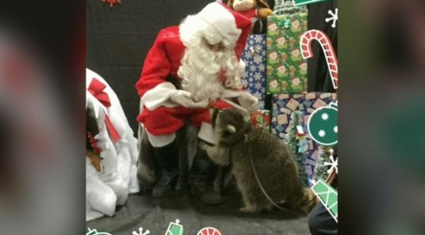 Лесной зверь стал частью семьи — его, в частности, водили фотографироваться к Санта-Клаусу