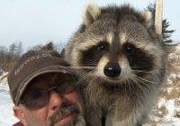 В Канаде бизнесмен спас енота по имени Рэмбо