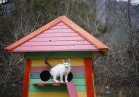 Первую кошачью деревню построят в Турции