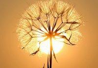 Эксперты из США выяснили, что произойдет, если Солнце погаснет на сутки