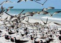 Политическую нестабильность ученые связали с вымиранием видов