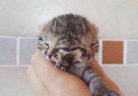 Котенка с 2 носами и 3 глазами спасли в Африке