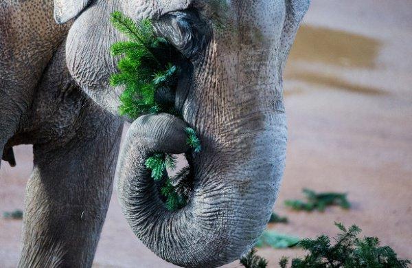 В результате животные отрицательно влияют на численность растений