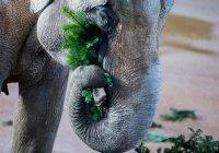 Биологи придумали необычный способ спасения деревьев от слонов