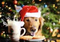 Собака и губернатор поздравили челябинцев с Новым Годом (ВИДЕО)