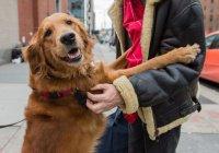 Самая дружелюбная собака Нью-Йорка осталась без дома