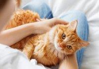 Кот  из США нашел хозяев через 10 лет после исчезновения