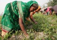 Фетва о женщинах обернулась тюрьмой для шейха из Бангладеш