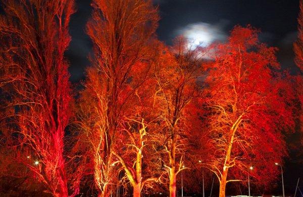 В связи с этим в скором времени будет возможно заменить цветами обычные лампочки