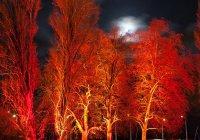 Светящиеся деревья заменили фонари в Нью-Йорке