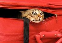 Из-за кота задержали рейс Киев-Анкара