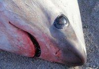 В США насмерть замерзли акулы
