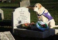 Собака отказалась покидать могилу хозяина в США (ВИДЕО)