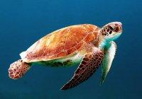 Во Флориде спасли больше 100 замерзших черепах