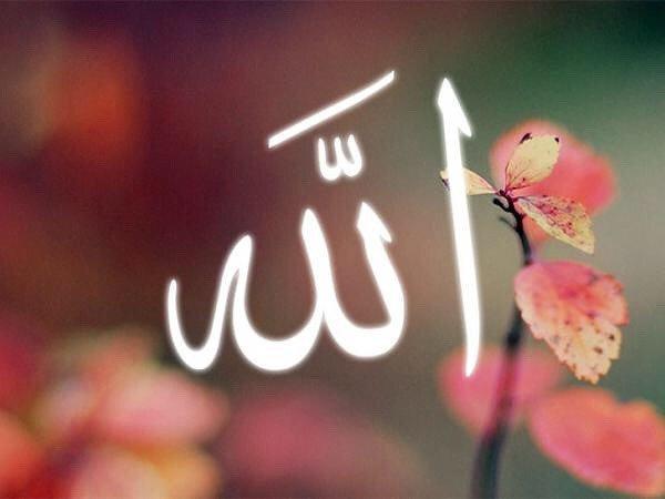 «Если вы любите Аллаха, то следуйте за мной, и тогда Аллах возлюбит вас»