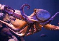 Метаморфозы напуганного осьминога показали на видео