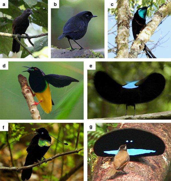 Состав перьев специалисты объяснили особенностями полового отбора ряда птичьих видов