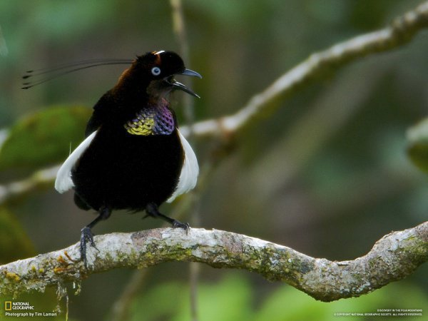 При этом низкая отражающая способность в большой степени изменяет и внешний вид птиц, «ломая» силуэт и придавая ему необычную форму