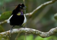 Найдены самые черные в мире птицы