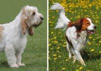 В США признали 2 новые породы собак