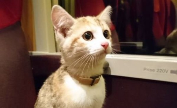 Во время путешествия котенок вел себя спокойно и дружелюбно