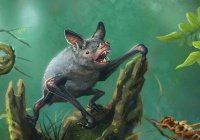В Новой Зеландии найдены останки гигантской летучей мыши