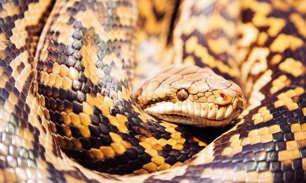 Женщина держит в доме больше 10 кошек и думает, что гигантская змея хотела их съесть