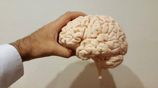По мнению специалистов, блокирование действия белка позволит приостановить старение мозга