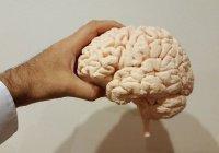 Найден способ спасти мозг человека от старения