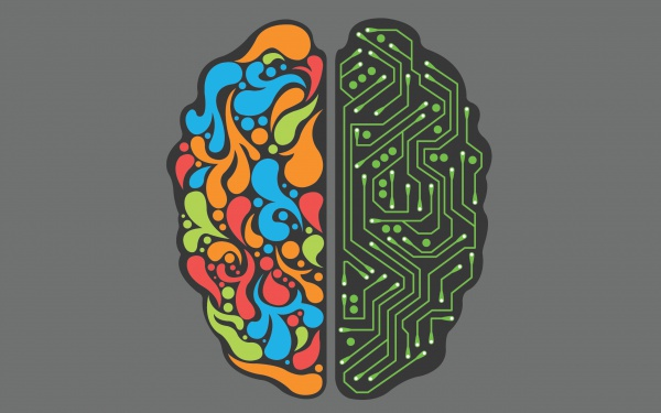 Белок усиливает межклеточное взаимодействие и за короткое время позволяет развивать долговременную память