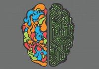Нейробиологи «прокачали» память протеином