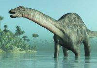 Ученые нашли неизвестного науке динозавра в Сибири