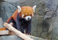 Реалити-шоу стартовало в зоопарке Москвы