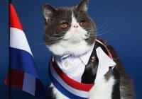 МИД Франции официально взяло на работу 2 кошек