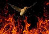 Птица, которая была готова кинуться в огонь за Ибрагимом (а.с.)
