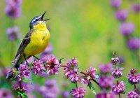 Об изменении климата расскажут певчие птицы