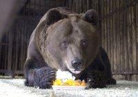 Самого доброго медведя накормили тортом в Самаре (ФОТО)