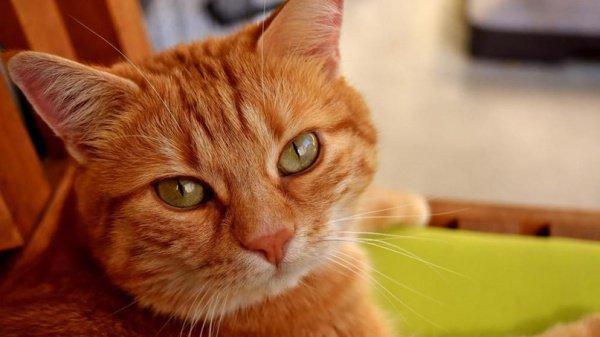 ВИталии женщина завещала 30 тыс. евро своему коту
