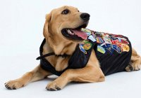 В Австралии собаки отберут работу у моделей