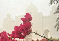 4 тайны Всевышнего Аллаха