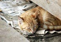Бездомный кот спас школьника в Калининградской области
