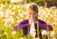 Найден способ предотвратить возникновение аллергии